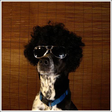 Afrohond